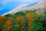 Rydal Fell in autumn