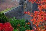 Autumn trees at Grasmere
