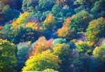 Autumn trees at Rydal