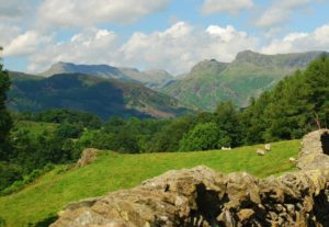 Langdales from Ivy Crag