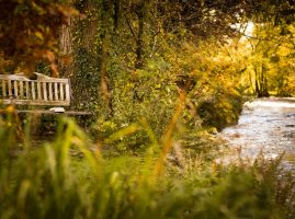 Sawmill Cottage, River Crake and Bench